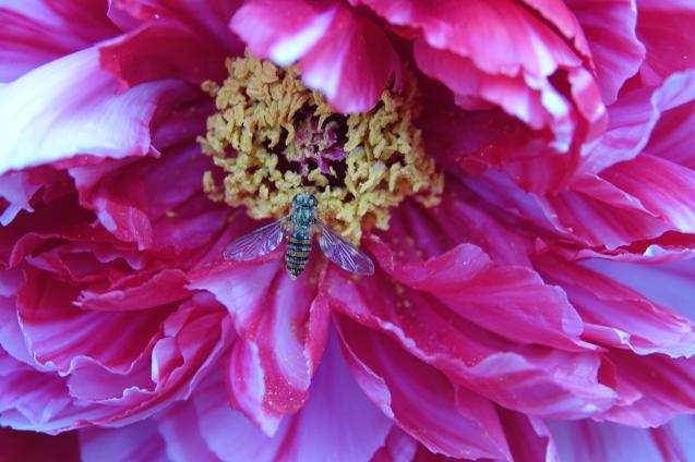 花への来客_c0104227_18043442.jpg