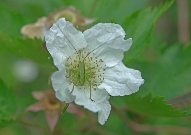 花への来客_c0104227_18045096.jpg
