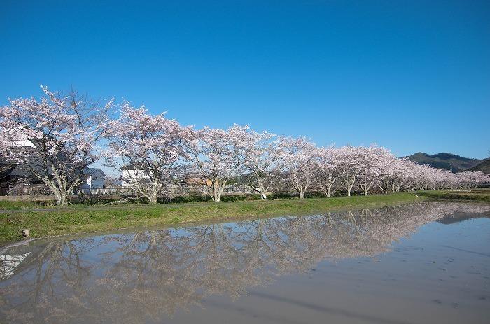いつもの桜並木 2019_c0106831_21354515.jpg
