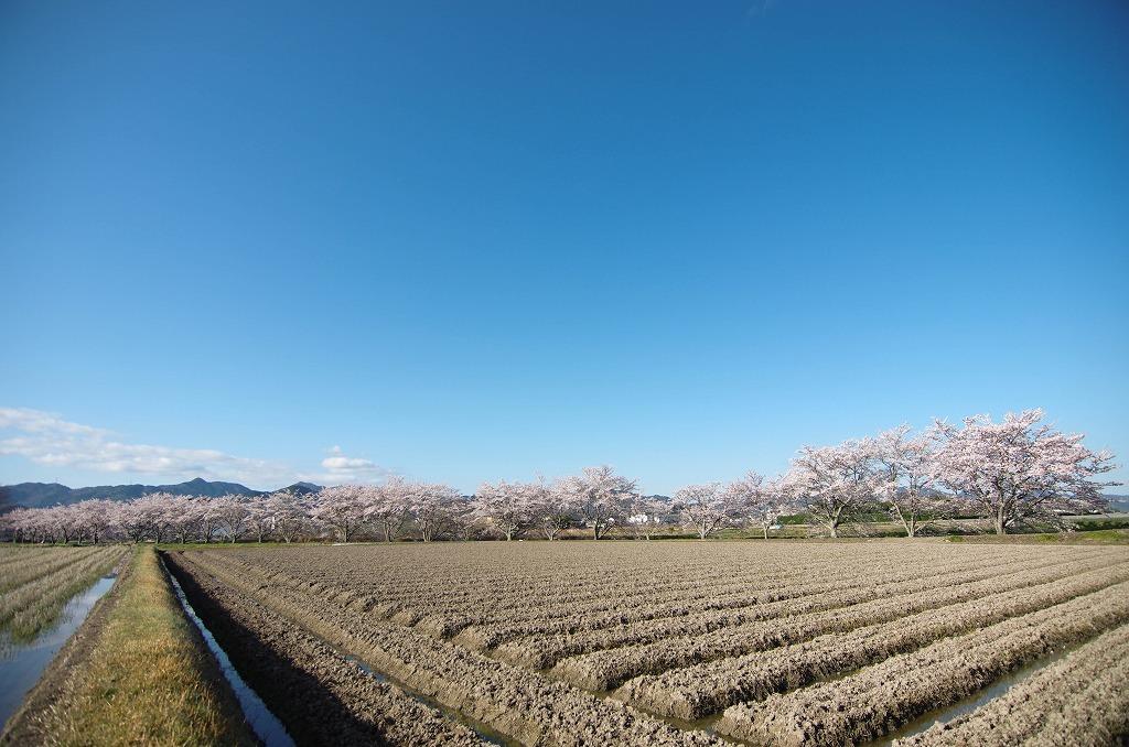いつもの桜並木 2019_c0106831_21354850.jpg