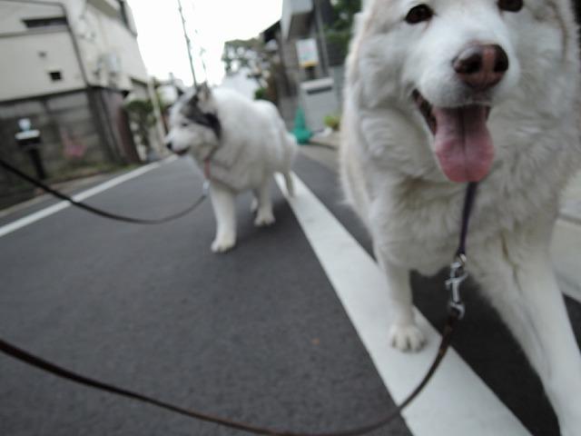 散歩屋日誌【3】_c0062832_15413048.jpg