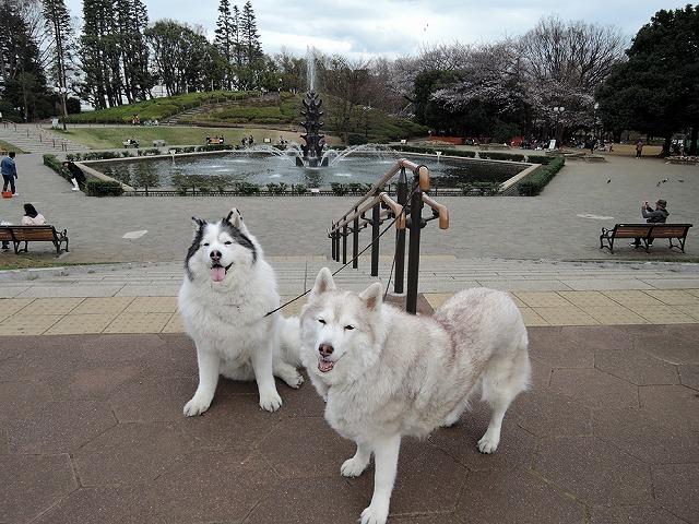 散歩屋日誌【3】_c0062832_15413140.jpg