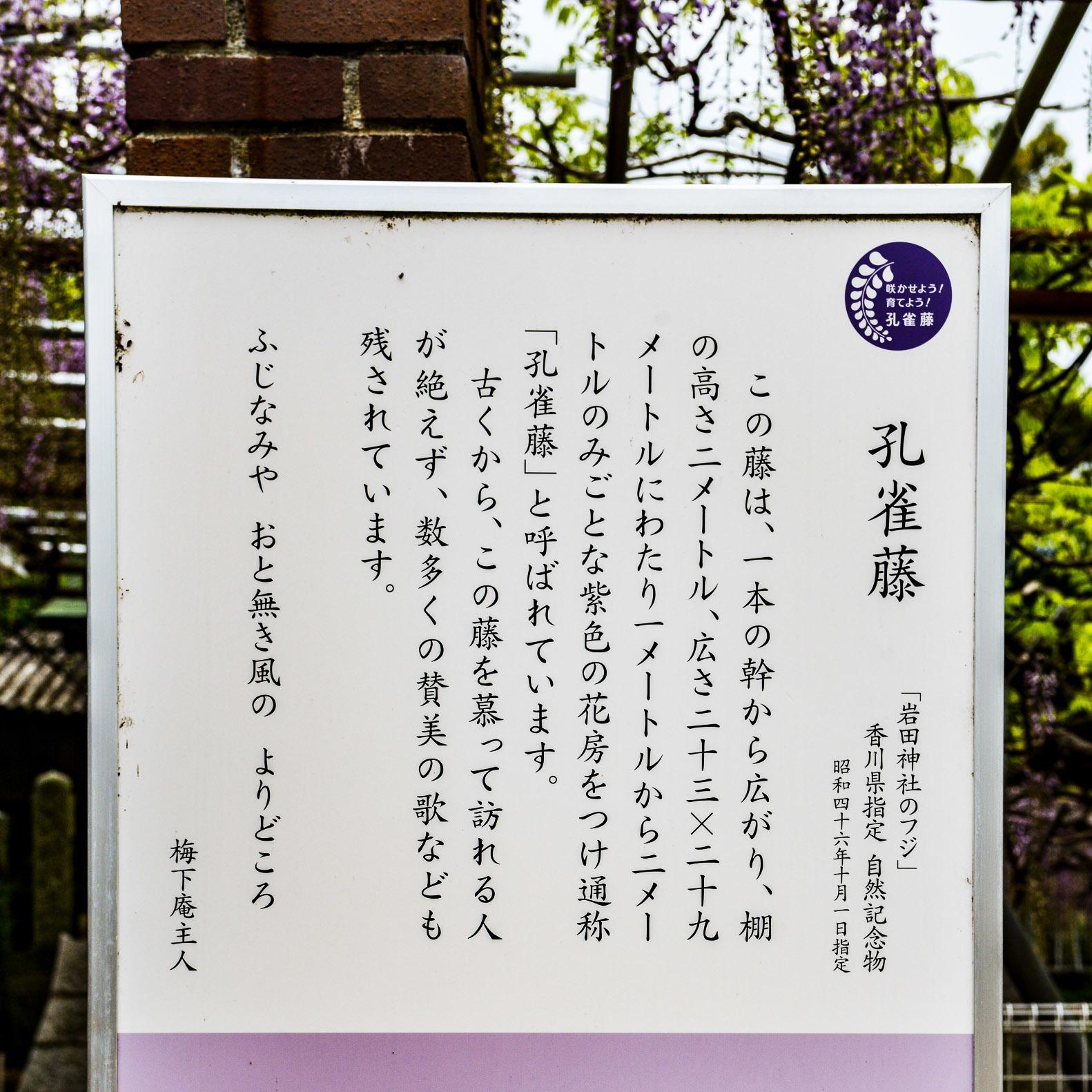 岩田神社 孔雀藤 2019_d0246136_19432622.jpg