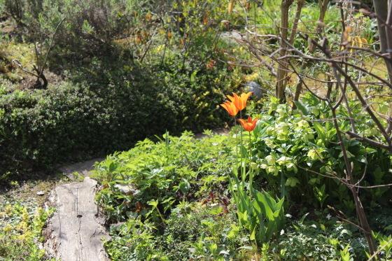 庭の様子_b0132338_08583226.jpeg