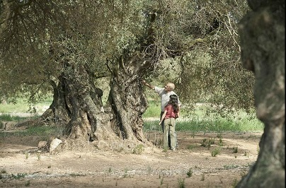 オリーブの樹は呼んでいる El Olivo_e0040938_13512491.jpg