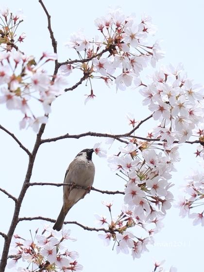京都 動物園で撮影会 in 京都市動物園_e0227942_20383960.jpg