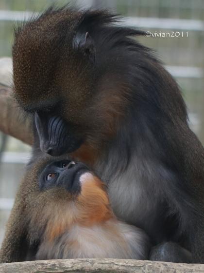 京都 動物園で撮影会 in 京都市動物園_e0227942_20423128.jpg
