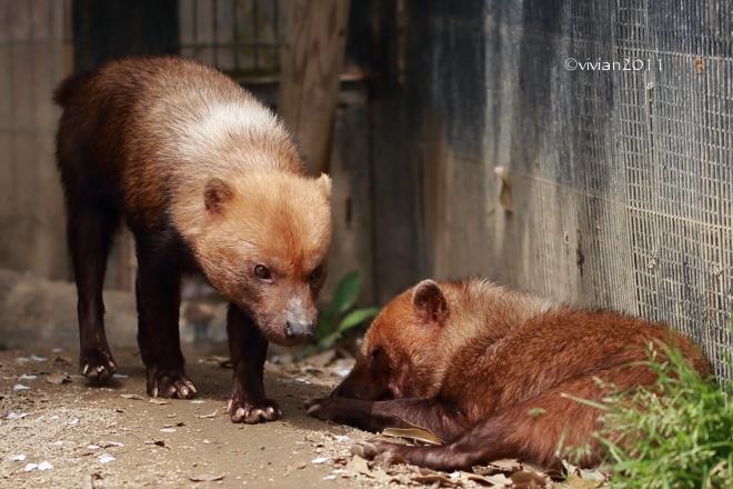 京都 動物園で撮影会 in 京都市動物園_e0227942_20494353.jpg
