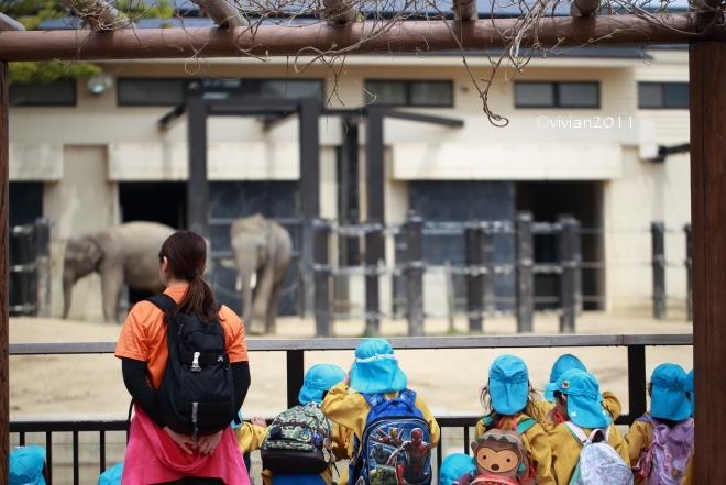 京都 動物園で撮影会 in 京都市動物園_e0227942_20515239.jpg