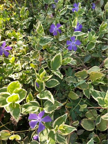 今朝の庭。_f0207146_07474645.jpg