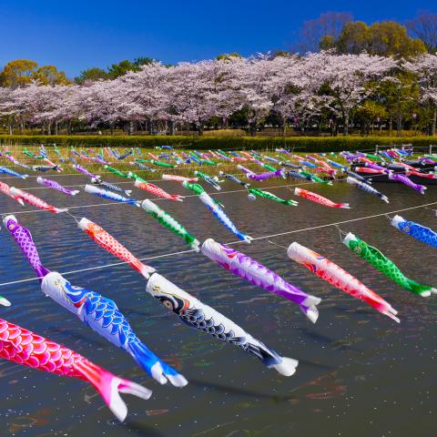 鯉のぼり(´-`).。oO_a0217348_15431286.jpg
