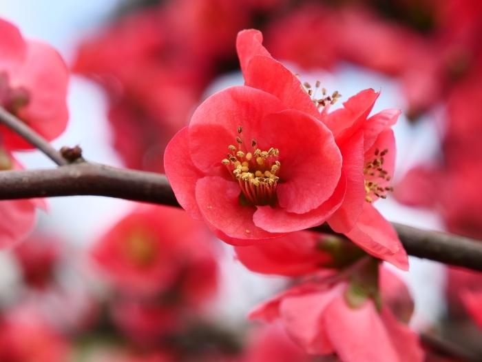 春の里山を行く  2019-04-25 00:00   _b0093754_21542573.jpg
