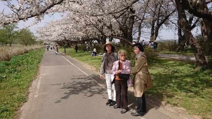 桜満開・展勝地_c0050063_14043775.jpg