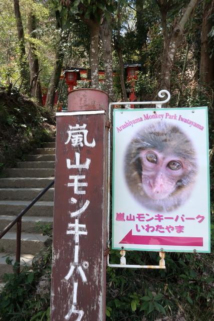 孫と嵐山 モンキーパークへ_b0055171_00253190.jpg