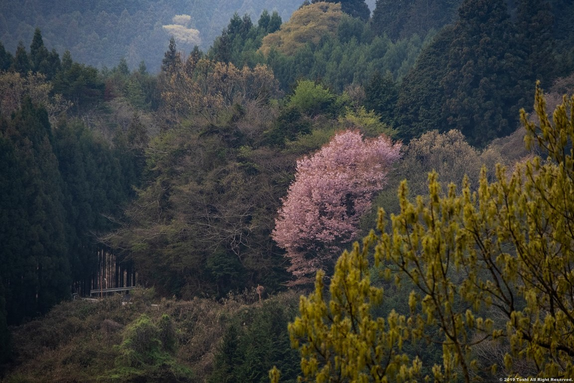 宇陀 名残の桜_c0350572_13274681.jpg