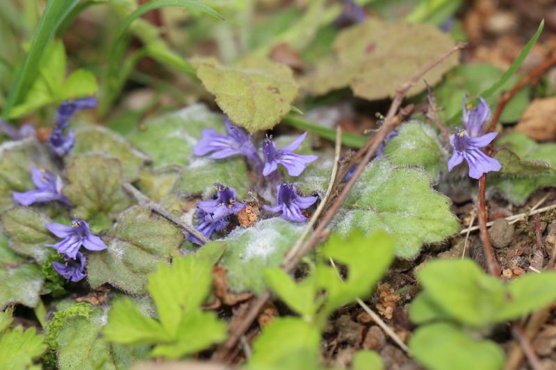 春真っ盛り!_f0361087_14475679.jpg