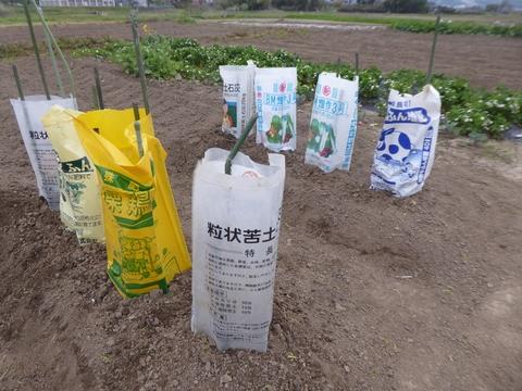 キューリ苗を植えました。_e0087201_18415931.jpg