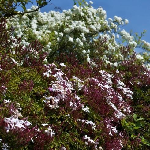 春が来た 07_f0099102_18135886.jpg