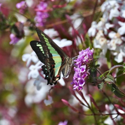 春が来た 07_f0099102_18142929.jpg