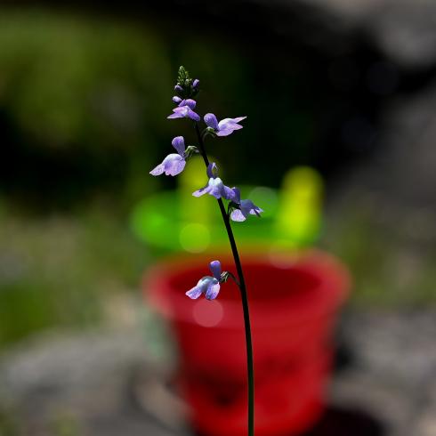 春が来た 07_f0099102_18162431.jpg