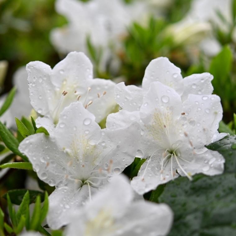 春が来た 07_f0099102_18170410.jpg