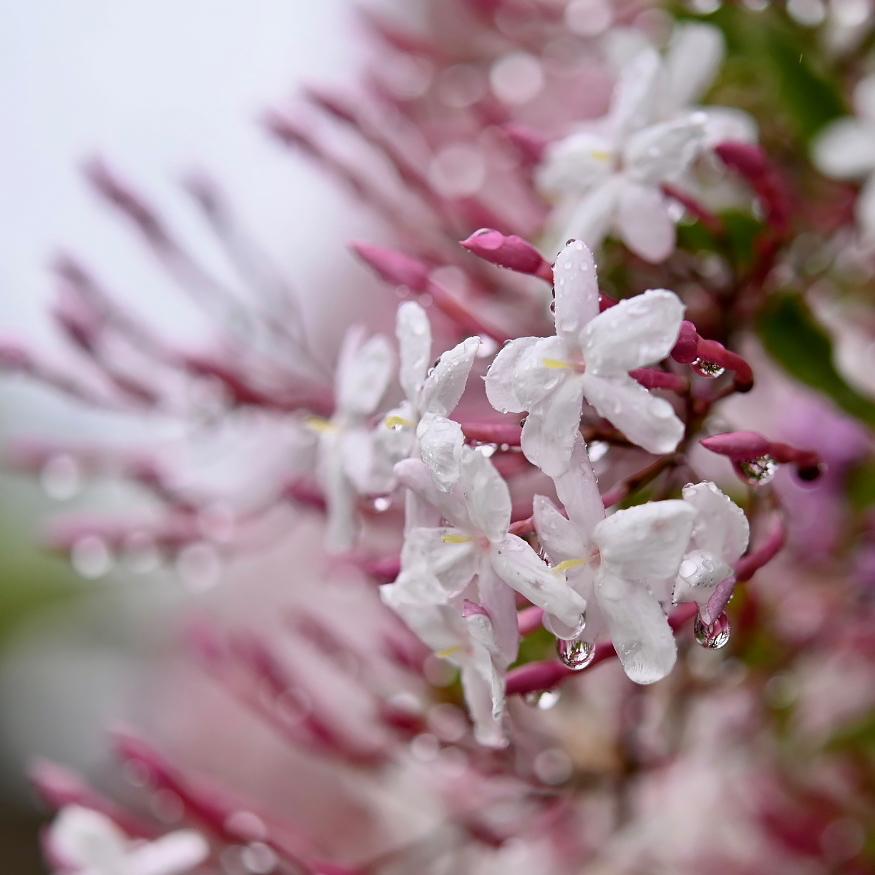 春が来た 07_f0099102_18173010.jpg