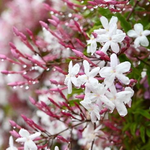春が来た 07_f0099102_18175105.jpg