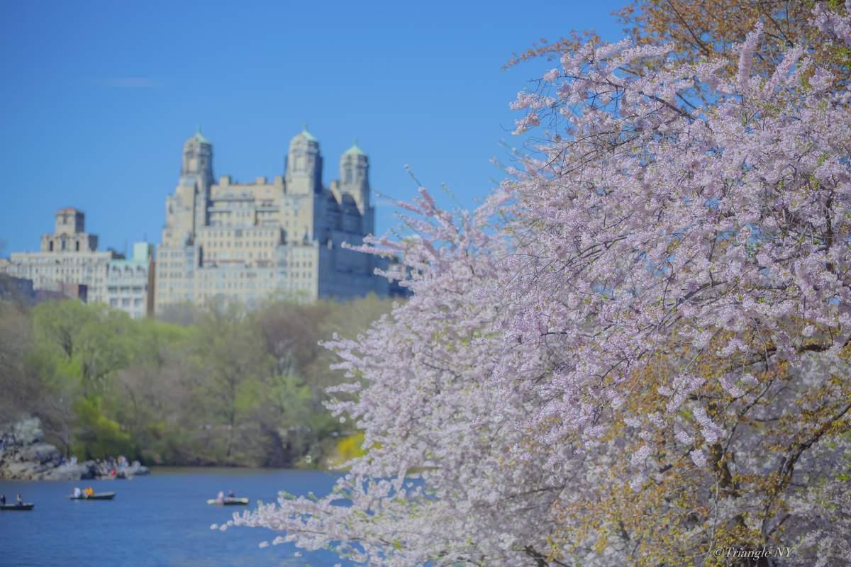 Spring New York 2019 ー900作品達成記念⑦ー_a0274805_20020913.jpg