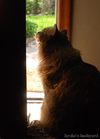 ドアの隙間からお庭を観察_b0253205_09024755.jpg