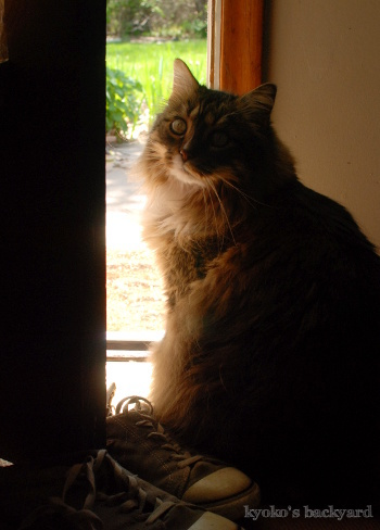 ドアの隙間からお庭を観察_b0253205_09025841.jpg