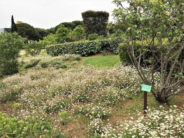 バラ公園の散策_b0064411_00530155.jpg