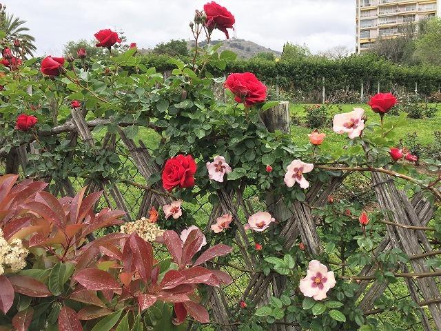 バラ公園の散策_b0064411_00530170.jpg
