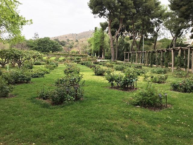 バラ公園の散策_b0064411_00530284.jpg