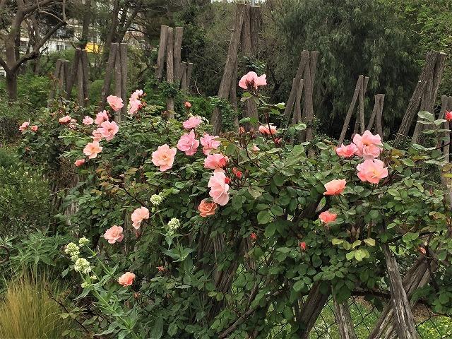 バラ公園の散策_b0064411_00582613.jpg