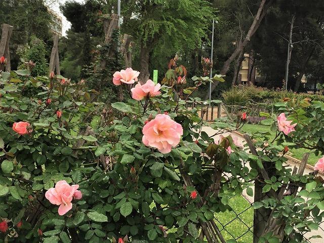 バラ公園の散策_b0064411_00582628.jpg