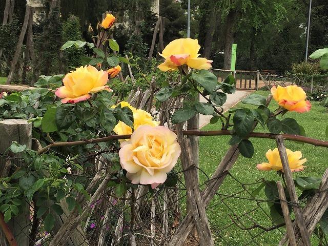 バラ公園の散策_b0064411_00582654.jpg