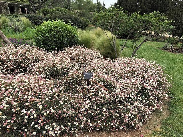 バラ公園の散策_b0064411_00593719.jpg