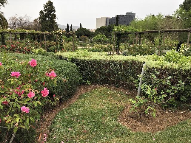 バラ公園の散策_b0064411_00593814.jpg
