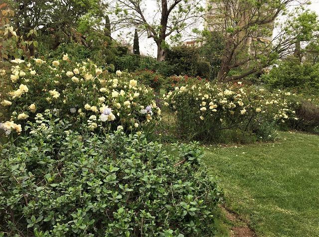 バラ公園の散策_b0064411_00593846.jpg