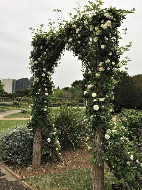バラ公園の散策_b0064411_00593883.jpg