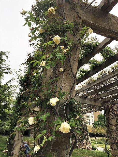 バラ公園の散策_b0064411_01015958.jpg
