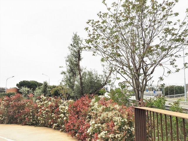 セルバンテス公園から続く遊歩道_b0064411_01271771.jpg