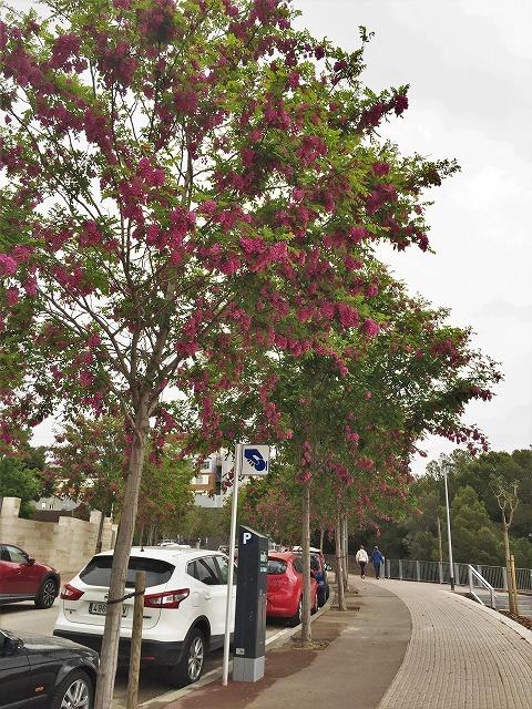 セルバンテス公園から続く遊歩道_b0064411_01303452.jpg