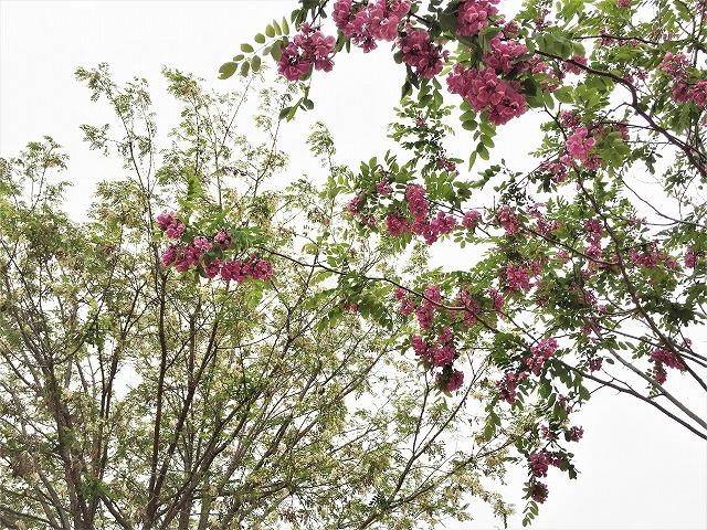 セルバンテス公園から続く遊歩道_b0064411_01303477.jpg