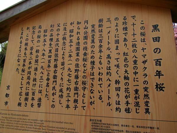 黒田の百年さくら_e0048413_18254465.jpg