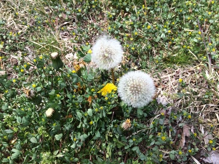またまた「自然観察&春の山菜を食す会」_e0036217_15311679.jpg