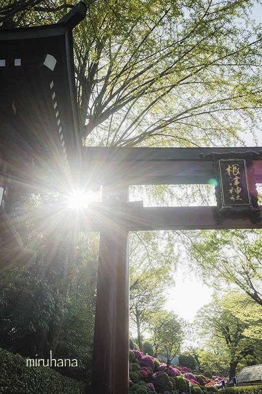 文京区根津神社と界隈*縦構図さんぽ。_c0037519_10224699.jpg