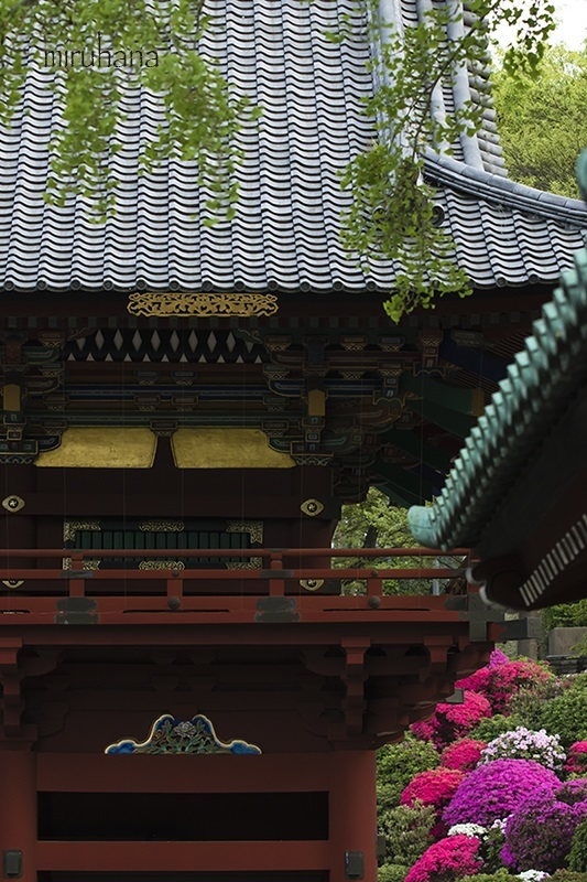 文京区根津神社と界隈*縦構図さんぽ。_c0037519_10230459.jpg