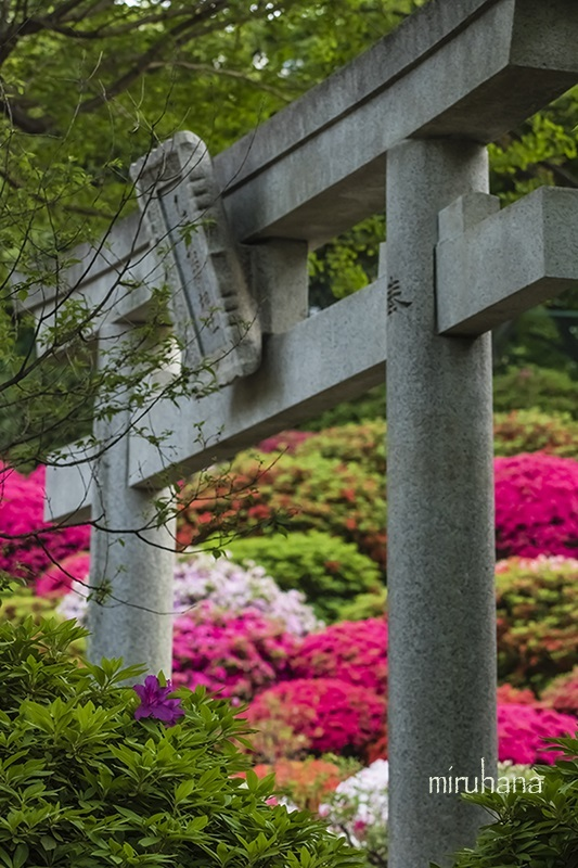 文京区根津神社と界隈*縦構図さんぽ。_c0037519_10231202.jpg