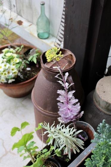 玄関の鉢植え_b0132338_12545176.jpeg